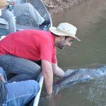 pesca esportiva do pintado