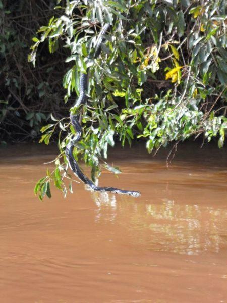 Hora da cobra beber água literalmente ..... rsrs