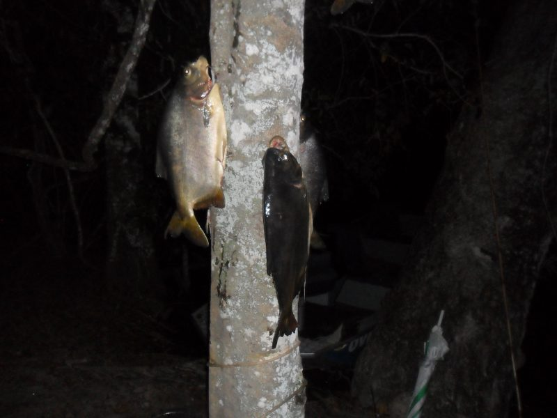 pescaria 011.JPG