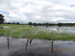 enchente no pantanal 001.JPG