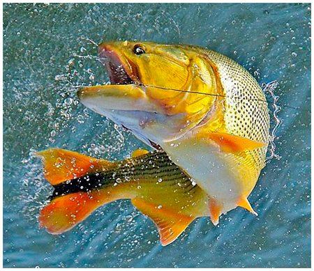 pescaria-dourado-salto.jpg