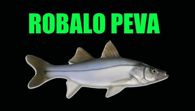 ROBALO-PEVA-770x439_c.jpg