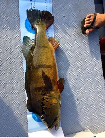 peixe na regua.JPG